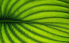 Hoja verde, rayas