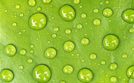 Green leaf, water droplets, macro photography