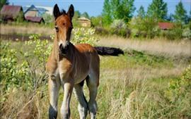 Bebê do cavalo, campo