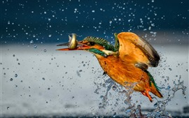 Preview wallpaper Kingfisher catch a fish, water splash
