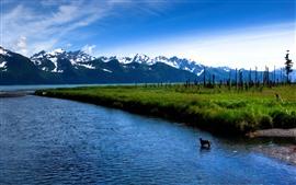 Lago, montanhas, cão