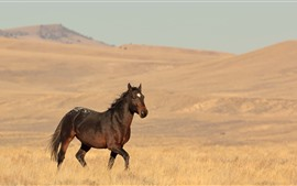 Preview wallpaper Lonely horse, grassland