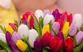 Many tulips, colorful flowers, bouquet
