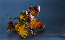 Кленовые листья, серый фон