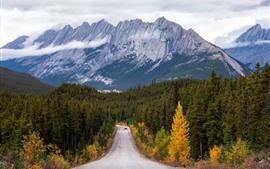 Montanhas, árvores, estrada, carro, nuvens