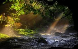 Природа, деревья, ручей, солнечные лучи