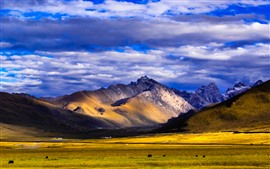 Nianbaoyuze, montanhas, pastagem, nuvens, Qinghai, China