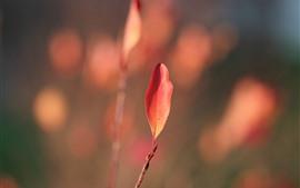 미리보기 배경 화면 하나의 붉은 잎 근접, 헷갈리는 배경