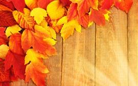 Hojas de arce anaranjado y amarillo, tablero de madera
