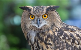 Preview wallpaper Owl look at you, yellow eyes, bird