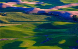 Preview wallpaper Palouse, green wheat fields, trees, USA