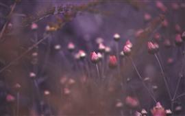 Розовые цветы бутон готовы цвести