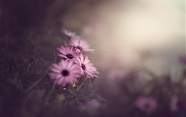 Flores rosas, fondo brumoso, mañana.