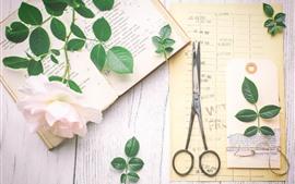 预览壁纸 粉红玫瑰,书,剪刀