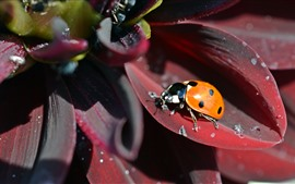 Preview wallpaper Red flower petals, yellow ladybug