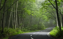 Road, forest, trees, fog, morning