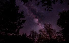 Preview wallpaper Starry, stars, purple sky, trees, night