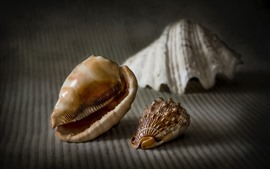 Preview wallpaper Still life, seashells