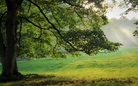 Preview wallpaper Summer, tree, green leaves, meadow, fog, sun rays