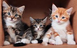 壁紙のプレビュー 3匹のかわいい子猫