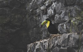 Preview wallpaper Toucan, rocks