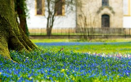 Preview wallpaper Tree trunk, blue flowers, spring