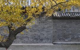 Árvore, folhas amarelas, parede