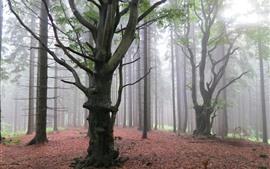 Árboles, bosque, niebla, amanecer.