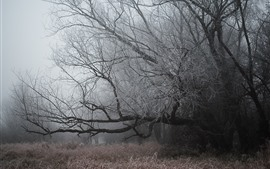 Preview wallpaper Trees, frost, grass, fog, cold