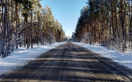 Trees, road, snow, winter, shadow