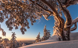 Preview wallpaper Trees, snow, winter, nature landscape