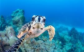 Olhar da tartaruga em você, subaquático