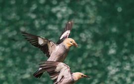 Dois pássaros, fundo verde