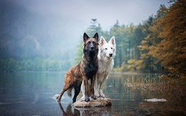 Preview wallpaper Two dogs, lake, water, wet