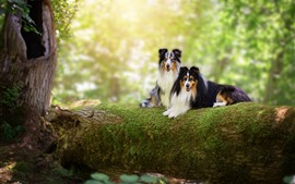 Dois, cachorros, filial árvore, musgo