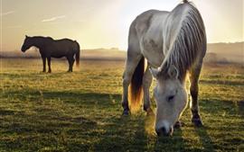 Dos caballos, pastizales, amanecer, mañana