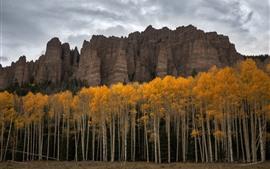 EUA, Colorado, árvores, penhasco, outono