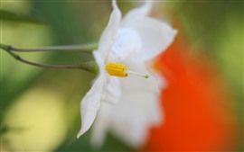 Preview wallpaper White flower close-up, petals, hazy