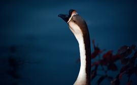Preview wallpaper Wild goose, neck, head