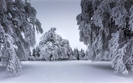 Aperçu fond d'écran Hiver, neige épaisse, arbres, brindilles