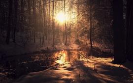 Inverno, árvores, neve, rio, raios de sol, manhã