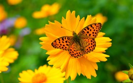 Flor amarela, pétalas, borboleta