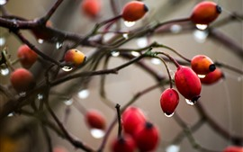 Preview wallpaper Berries, twigs, water droplets