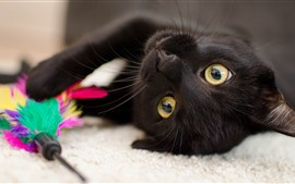 Black kitten, yellow eyes, playful