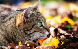 Preview wallpaper Cat, face, green eyes, leaves, autumn