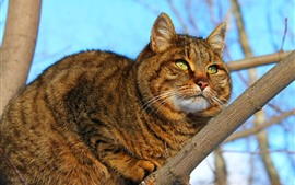 Cat rest in the tree, look, green eyes