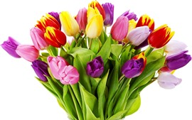 Preview wallpaper Colorful tulips, white background