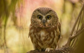 Preview wallpaper Cute little owl, standing