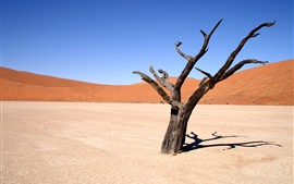 Preview wallpaper Dead tree, desert, hot