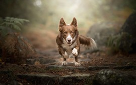 Preview wallpaper Dog running, face, front view, bokeh